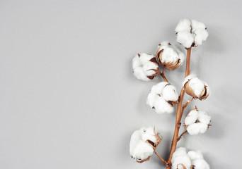 Cotton flower branch on gray background