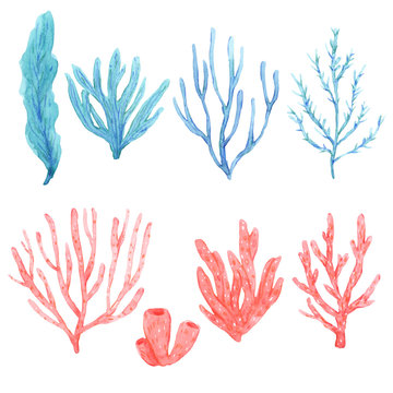 Set of bright watercolor seaweeds and corals
