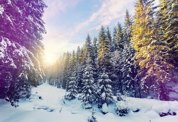 Fantastic winter mountain landscape. overcast colorful clouds, glowing in sunlight. alp trees, of snow covered , under in a warm sunlight. Dramatic wintry scene. instagram filter. creative image.