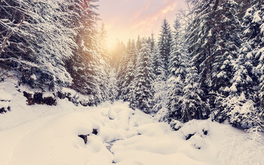 Majestic winter landscape. frosty pine tree under sunlight at sunset. christmas holiday concept, unusual wonderful landscape. fantastic wintry background. instagram effect. retro style. Wall mural