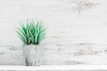 Loft style potted plant on shelf in front of grunge white wooden wall. View with copy space. Office workplace with a potted green plant, Minimalist plant background concept.