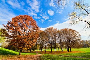 Pellerina park in Turin, Piedmont, Italy, in autumn season