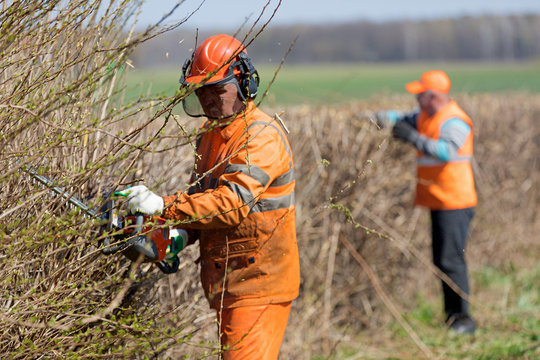 Hedge trimming service. Two landscapers men workers team in uniform  cutting hedgerow with Gas Powered hand Clipper