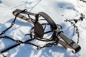 iron trap on hares mounted on a hare trail in the snow