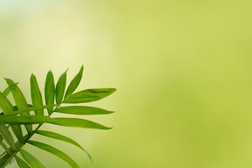 Natural background of green blur with fern leaf in natural light