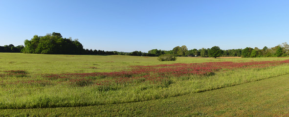 Clover fields at the Ingomar Mounds in Mississippi