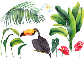 Tuinposter Botanisch Tropical set with toucan bird, banana leaves, palm, exotic anthurium flowers and plumeria frangipani flower. Watercolor on white background. Isolated elements for design.