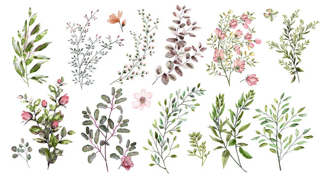 Watercolor illustration.  Botanical collection. A set of wild and garden herbs. Flowers, leaves, branches and other natural elements. All pictures isolated on white background.