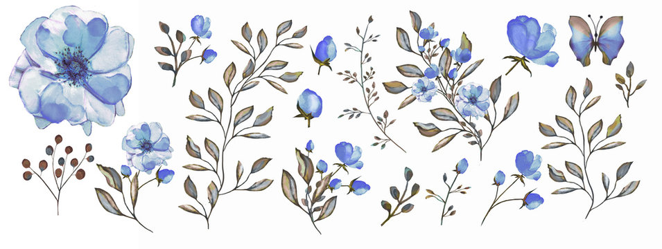 Watercolor illustration. Botanical collection.  Set: leaves, flowers,branches, herbs and other natural elements. Blue flowers.