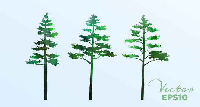 Set of watercolor pine trees . Vector illustration