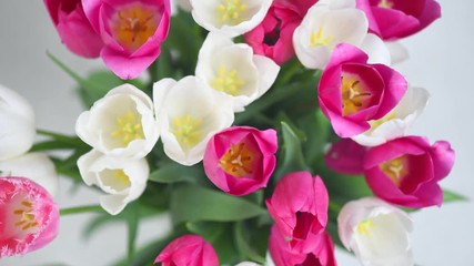 Fotoväggar - Tulips. Bright pink and white colorful tulip flowers blooming background. Holiday bouquet. Top view. Timelapse. 4K UHD video footage. 3840X2160