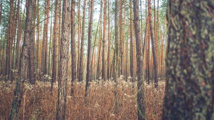 Gęsty las w promieniach słońca