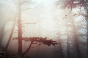 Fog in the forest Wall mural