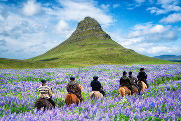 Tourist ride horse at Kirkjufell mountain landscape and waterfall in Iceland summer. Kirjufell is the beautiful landmark and the most photographed destination which attracts people to visit Iceland.
