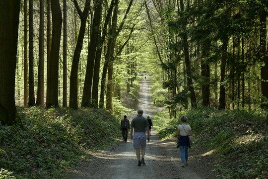 Promenade sur un chemin traversant le creux d'une vallée au milieu de la forêt de hêtre au Hallerbos près de Halle