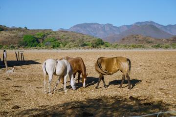 Mascota Jalisco México, paisaje en donde los caballos y la naturaleza se integran.