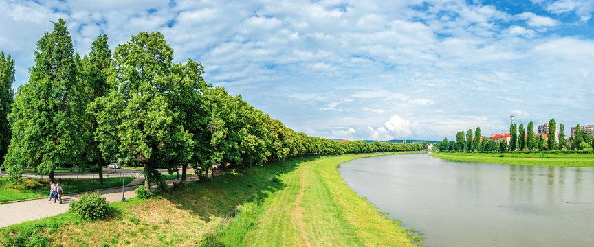 longest linden alley in europe. wonderful urban scenery near the river. pupular travel destination in uzhgorod, ukraine. panorama of trees in blossom on the grassy embankment