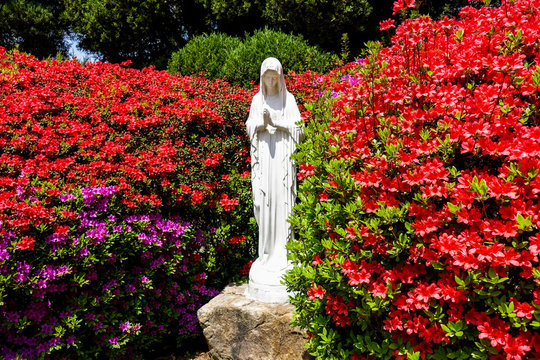 Beautiful flowers in full bloom and Virgin Mary statue