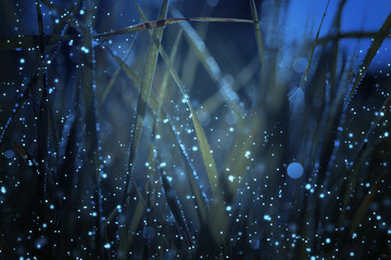 Abstract and magical photo of tall grass with Firefly flying in the night forest. Fairy tale concept