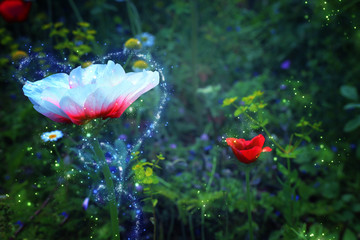 Abstract and magical photo of flower with Firefly flying in the night forest. Fairy tale concept