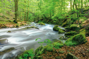 river in the ancient beech forest. stones covered in moss. smooth water flow, long exposure. beautiful nature background. refreshing summer scenery