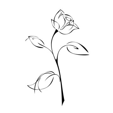 one stylized rose on a stem with leaves on a white background