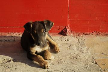 Dog on the street in Brazil