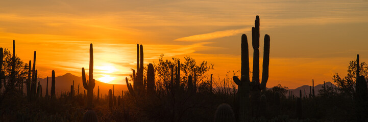 A panoramic view of saguaro and other cactus silhouettes as they dominate the Sonoran desert skyline at sunset