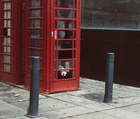 pies w budce telefonicznej w anglii