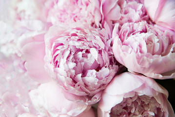 White and pink peonies. Background, wallpaper..