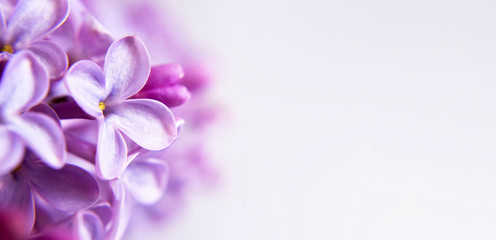 Floral background or banner with lilac flowers and copy space