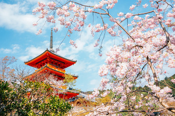 Spoed Fotobehang Kyoto Kiyomizu-dera temple with cherry blossoms at spring in Kyoto, Japan