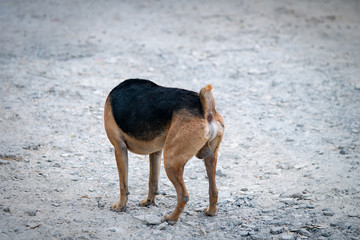 Headless dog ,Picture of a dog without a head Standing on the road