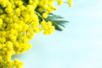 Blue background with yellow mimosa