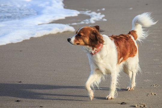 Kooiker on the beach