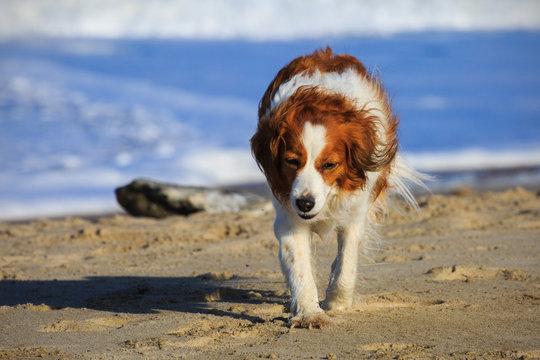 Kooiker on Beach