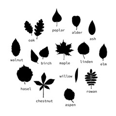 Vector set of black leaves silhouettes with text. Collection of isolated on white background monochrome birch, maple, oak, rowan, chestnut, hazel, linden, alder, aspen, elm, poplar, willow leaf