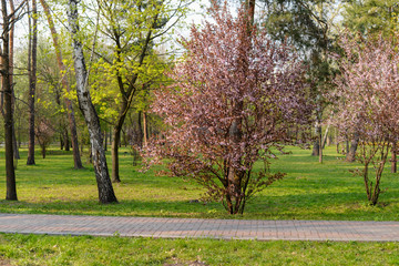 path in the spring park