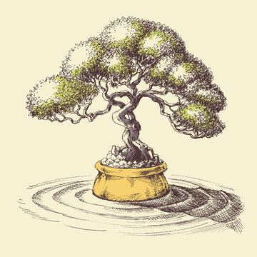 Bonsai tree. Spa and relaxation design