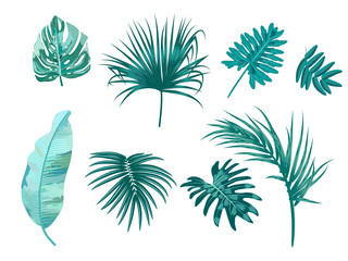 Tropical palm leaves set on white background.