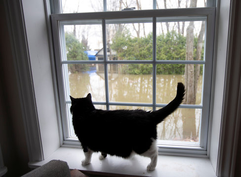 A cat looks out the window of its home on an evacuated street in Sainte-Marthe-sur-le-Lac, Quebec