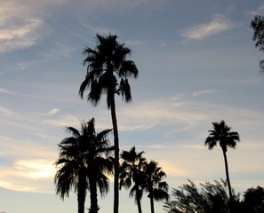 View of silhouettes of palm trees at sunset in Scottsdale, Arizona