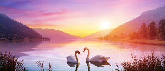 Foto op Aluminium Zwaan Swans Over Lake At Sunrise - Calm And Romance