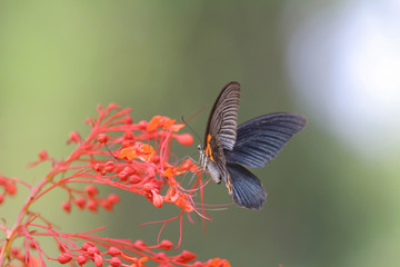 Butterfly insect in nature. Nature insect butterfly