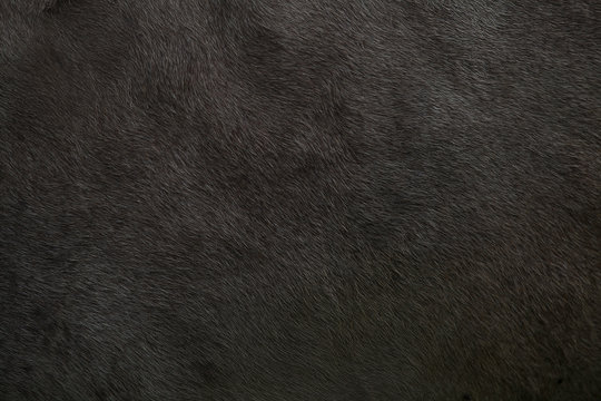 Background with a skin animal texture of a cow