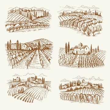 Vineyard landscape. France or italy vintage village wine vineyards vector hand drawn illustrations. Winery landscape drawing, farm agriculture grape