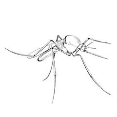 mosquito, lines, icon