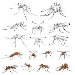 vector, isolated, mosquito set
