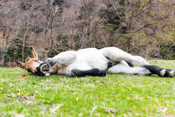 Portrait of a little foal on a field