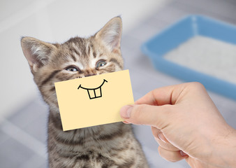 Papier Peint - funny cat with crazy smile sitting near clean toilet